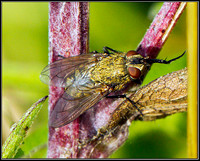 Cluster-Fly